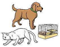 Hund, Katze und Goldhamster